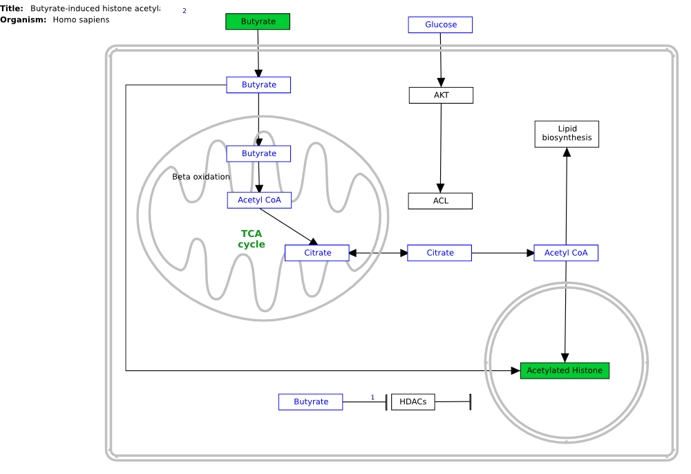 Diagram for pathway WP2366