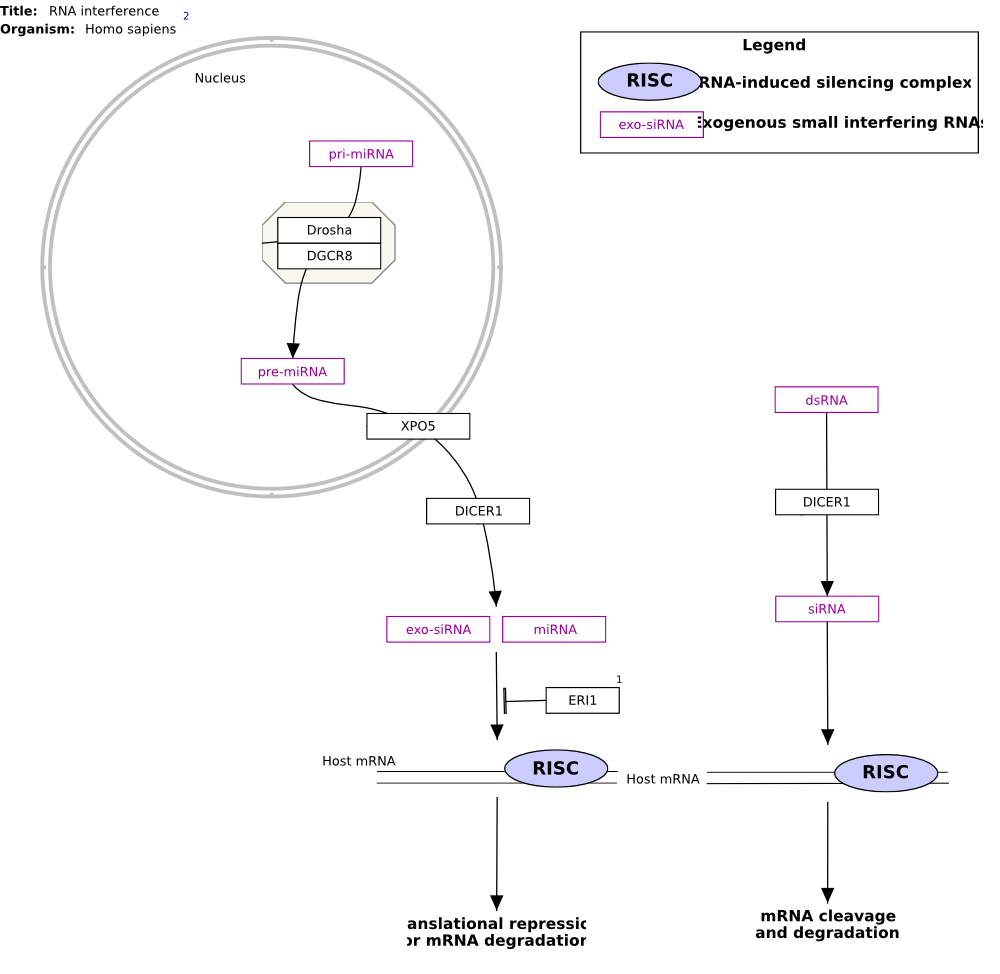 Diagram for pathway Pathway:WP2805