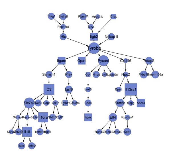 WikiPathways styled in Cytoscape